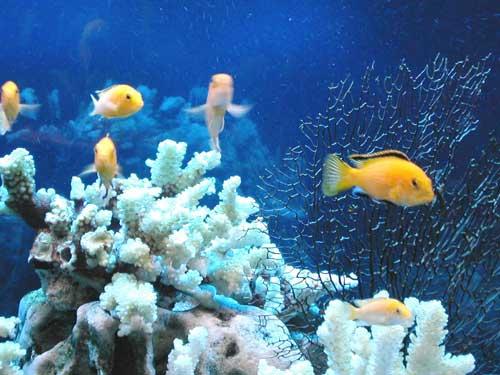 Стиль оформления аквариума Псевдоморе